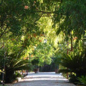finca hotel cas sant mallorca jardin